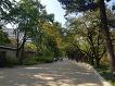 덕수궁 산책, 나무와 건물의 조화로움이 눈에 들어오다.