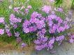 5월 길가 화단 꽃들