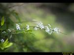 청도 복사꽃 마을  봄나들이