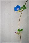 #81 The flower