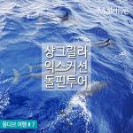 몰디브 샹그릴라 돌핀투어 : 돌고래 만나러 고고!!