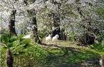 아 봄날이여 !