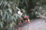 범어사 동박새와 곤줄박이들 (2)