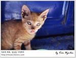 [적묘의 페루]입양가는 아기고양이,이키토스 아마존 강가 롯지,Lodge