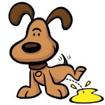반려견 강아지 소변색으로 건강체크하기