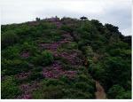 4월 끝자락 비음산 철쭉과 야생화들..
