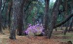 삼릉의 봄