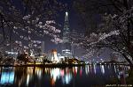 서울 야경 명소- 석촌호수 벚꽃 야경