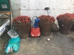 꽃을 심어도 쓰레기를 무단투기하는 이유