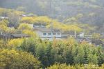 구례 산수유꽃축제, 마을이 온통 노랗게 물들어가는 봄날 풍경