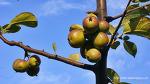 가을열매와 가을꽃사진(1)
