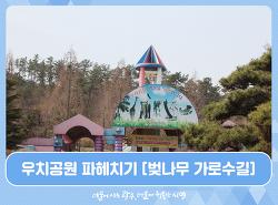다양한 볼거리가 있는 우치공원 파헤치기 [벚나무가 들어선 가로수길]