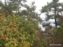 통영 일몰이 아름다운 달아공원[통영 가볼만한곳,통영여행코스]