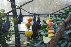 독일 동물원에서 볼수 있는 귀한 동물 7종