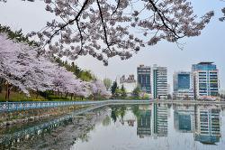 용지호수의 봄