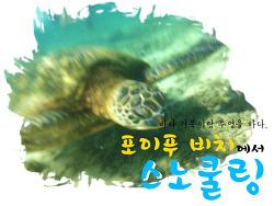 포이푸 비치에서 바다거북이와 수영을 하다.