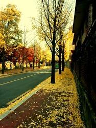 가을은행나무길