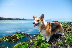 남는 건 사진 뿐! 반려동물 입장 가능한 사진 찍기 좋은 장소 추천!
