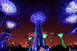 싱가포르여행: 가든 바이 더 베이 (Gardens by the bay), 떠오르는 싱가포르 야경