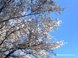 It's spring..