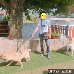대구 근처 강아지 수영장 / 경북 왜관 이삭애견훈련소 / 샤페이 수영
