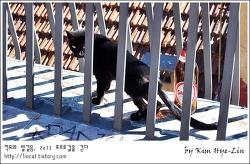 [적묘의 포르투갈]리스본  전망좋은 공원에서 만난 검은 고양이
