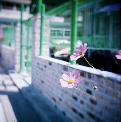 길가에 꽃