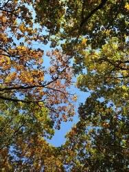 강원도 설악산 나무 숲 단풍나무 2013