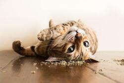 고양이 마약 캣닙(개박하)에 빠진 고양이들