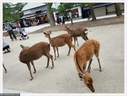 오사카 여행 4일차 - 나라 사슴공원