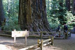 산호세 남서쪽 빅베이슨 레드우드(Big Basin Redwoods) 주립공원에서 만난 '숲의 아빠와 엄마'