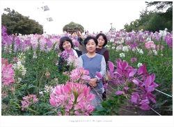 올림픽공원 들꽃마루 풍접초 향기를 담아 - 주연.혜영.향이