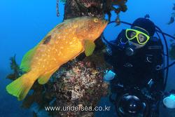 Dive in Oki Island, Japan