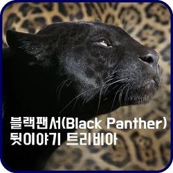 블랙 팬서(Black Panther) 제작에 얽힌 뒷이야기와 캐스팅 비화