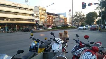 PAK CHONG, THAILAND (팍총, 태국)