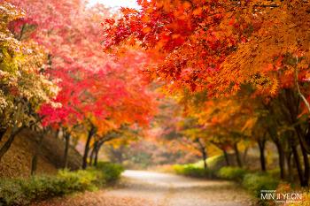 천안 독립기념관 단풍나무숲길 에 다녀왔어요^^