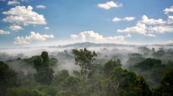 생명 40억년 비밀1 - 소리없는지배 식물