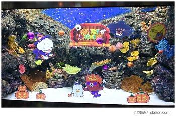 롯데월드 아쿠아리움 & 아이들과 가볼만한곳! 마린패밀리, 나만의 수조만들기 해양생물체험까지
