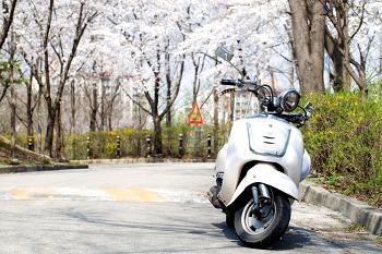 여주대학교 봄꽃 풍경
