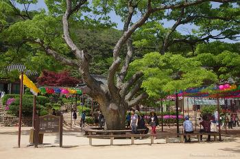 전등사@정족산 (2008여름, 2015봄) 傳燈寺  인천 강화군 길상면 온수리
