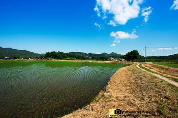 농촌풍경 - 모내기