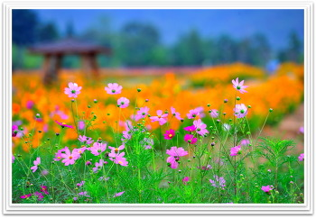 꽃밭에서 9ㅡ12