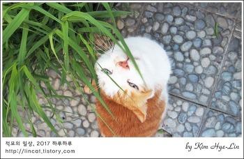 [적묘의 고양이]18살 노묘 초롱군, 파피루스를 선호하는 봄날 고양이