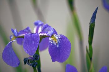 붓으로 꽃을 피우다
