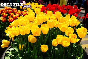 데이타파일 스타일 (DATA FILEE STYLE) 블로그 탄생 9주년 기념! 티스토리 초대장 배포