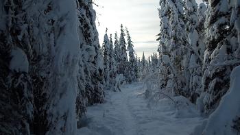 [알래스카 여행] 가문비 나무 숲길 걷기 - 트레킹 - Spruce Tree Trails [알래스카 신혼 여행] [알래스카 자유 여행] [알래스카 가족 여행] [알래스카 오로라 여행]