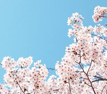 올봄 놓치기 아까운 봄꽃 축제 BEST 4