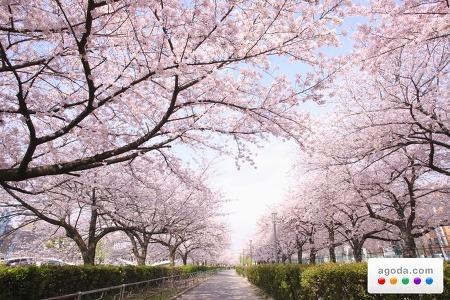 아고다닷컴(Agoda.com), 일본 벚꽃 시즌을 맞아 호텔 특가 상품 출시