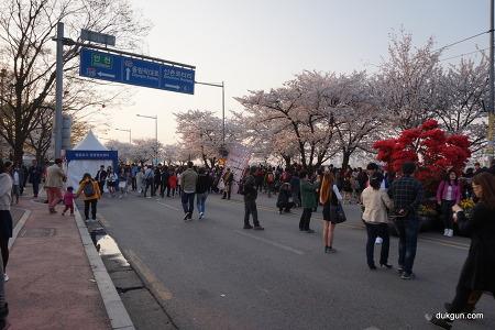 2015년 4월 여의도 윤중로 벚꽃 축제