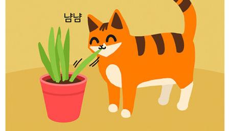 묘생인생 - 고양이 풀 뜯어먹는 소리